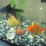 Стартап из хобби – как создать успешный бизнес на аквариумных рыбках